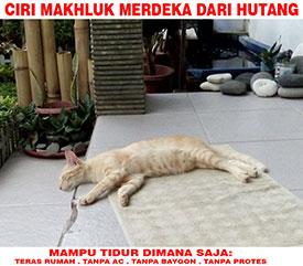 Meme kucing bebas dari hutang