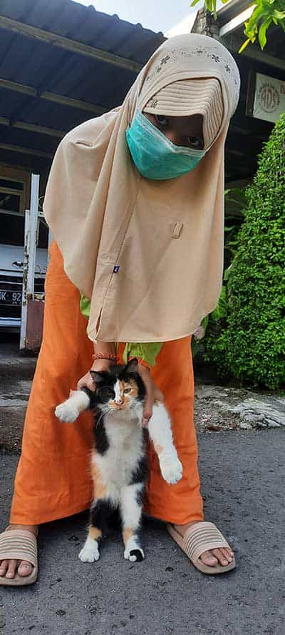 Cara merawat kitten / bayi kucing lucu usia satu bulan