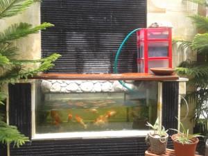 Ikan Nila telur dan anak