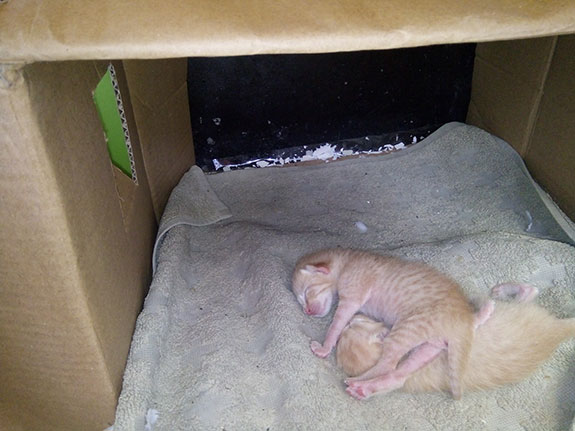 Anak Kucing TIdur Usia Satu Bulan