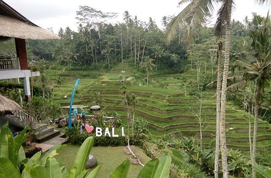 Wisata Gratis Tegalalang Ubud Bali